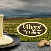 aligot-de-laubrac